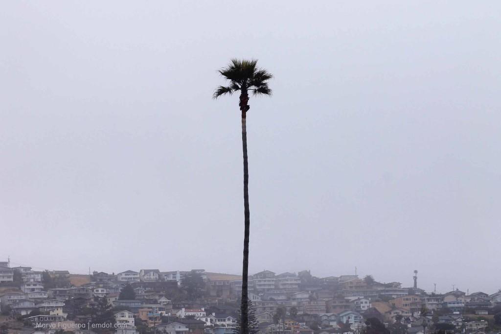 beachaweek_062313_palm