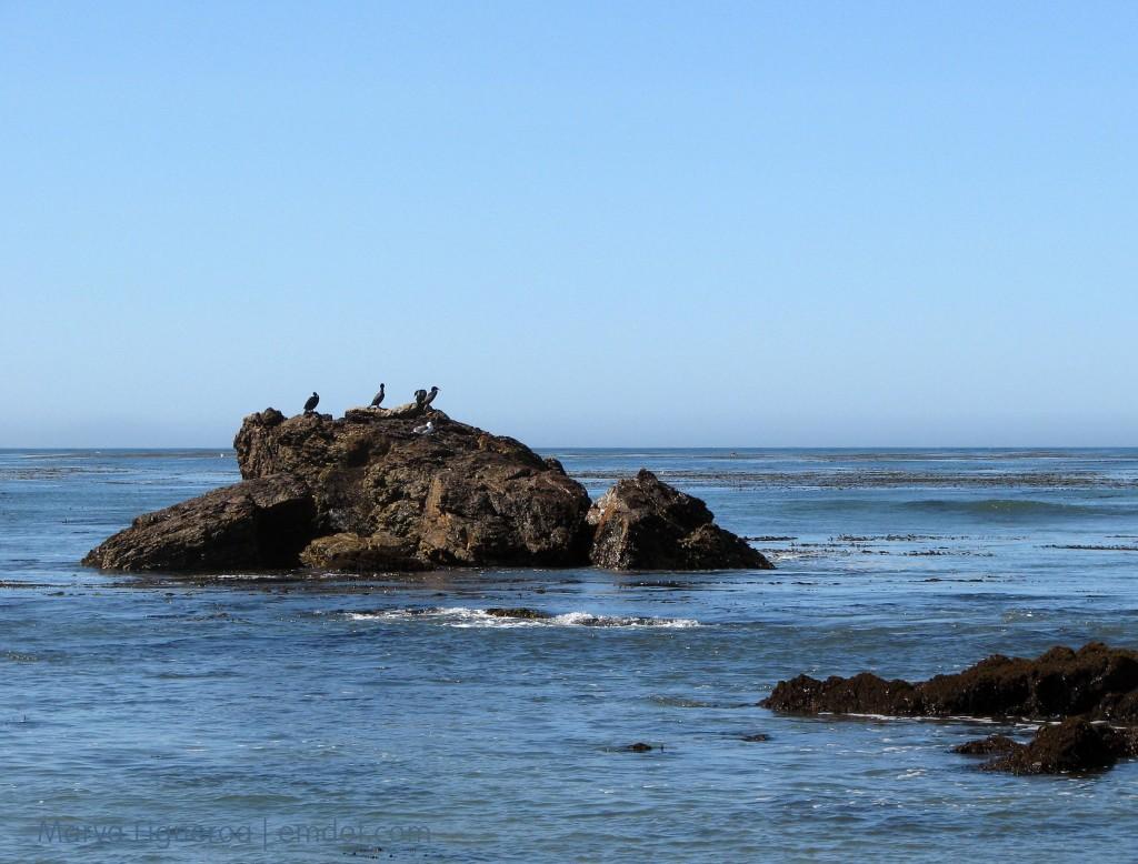 cormorants rock on