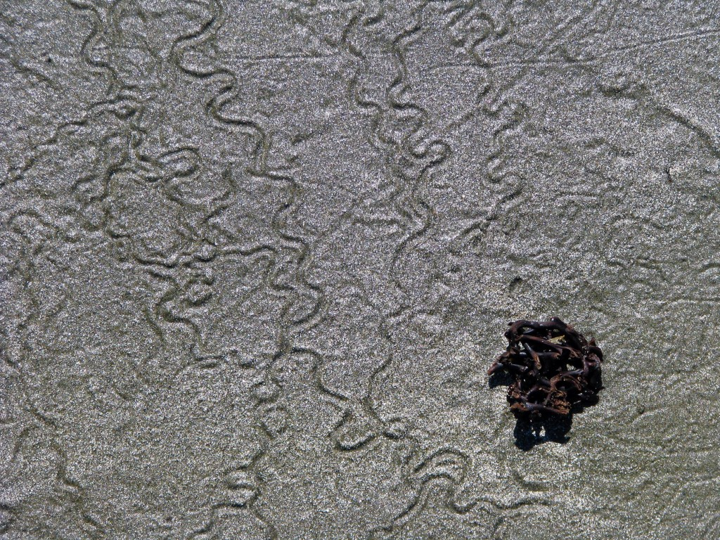 trail left by mysterious intertidal creature on the sand