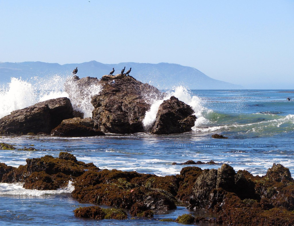 the cormorants and the wave