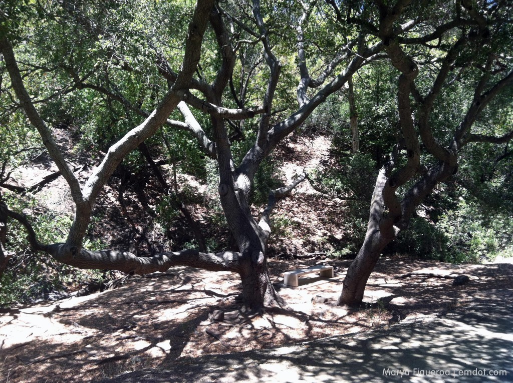Poly Canyon bench and trees