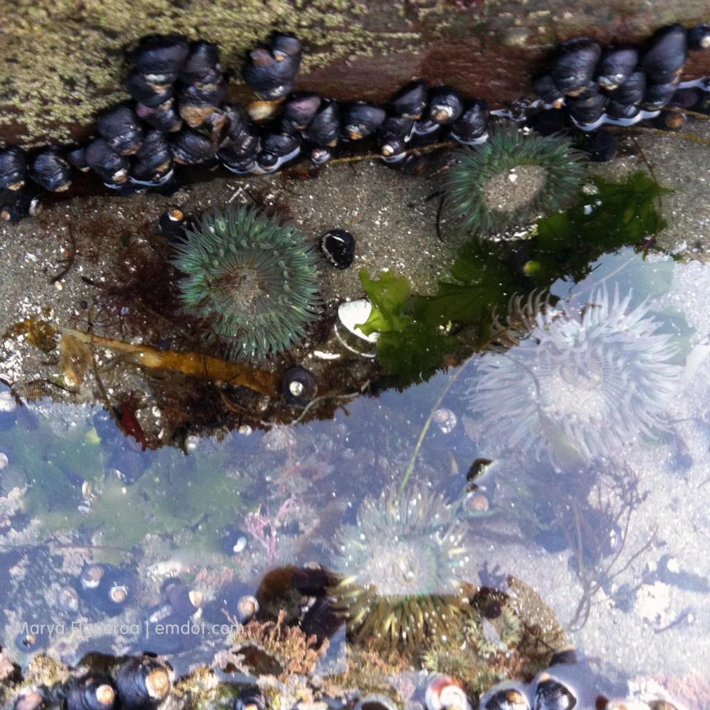 Sea anemones in the water