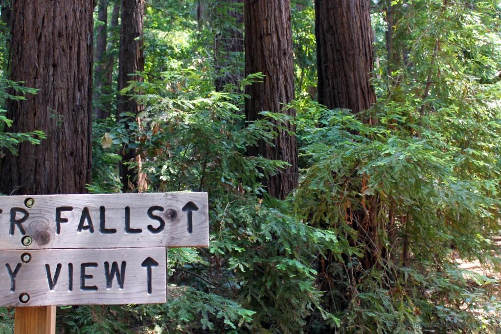 Falls. View. Coastal redwoods.