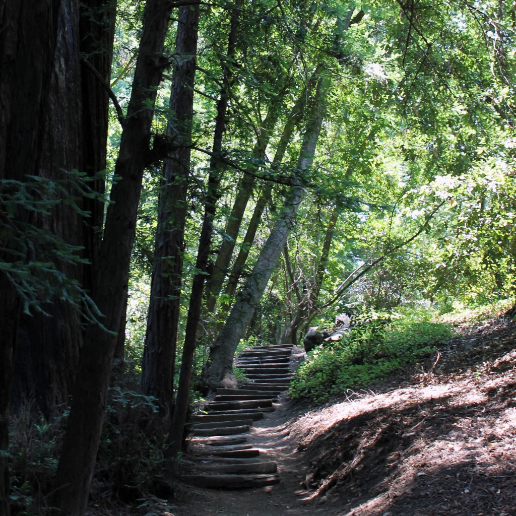 trail up