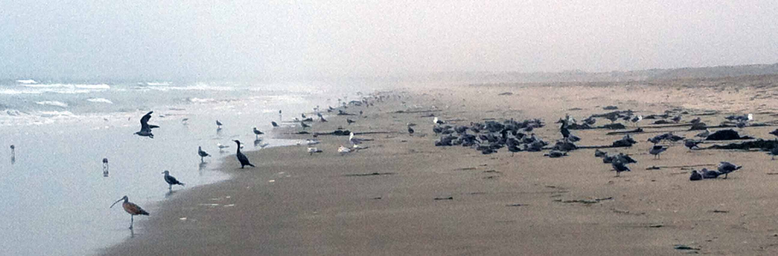 Many birds on the beach