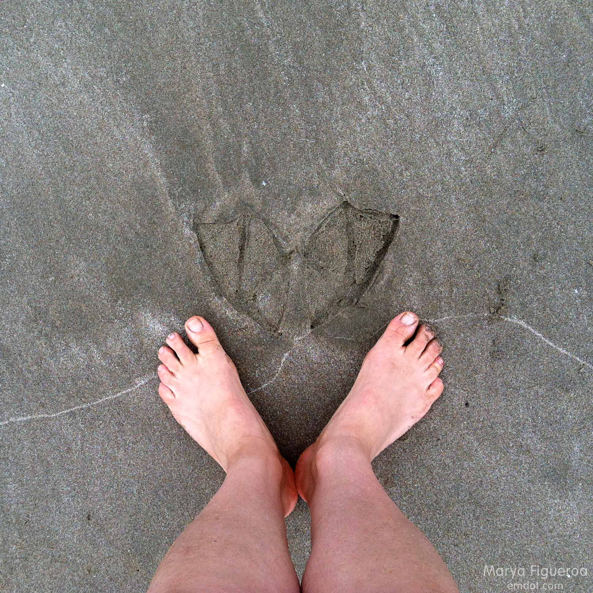 cormorant footprints with my feet in comparison