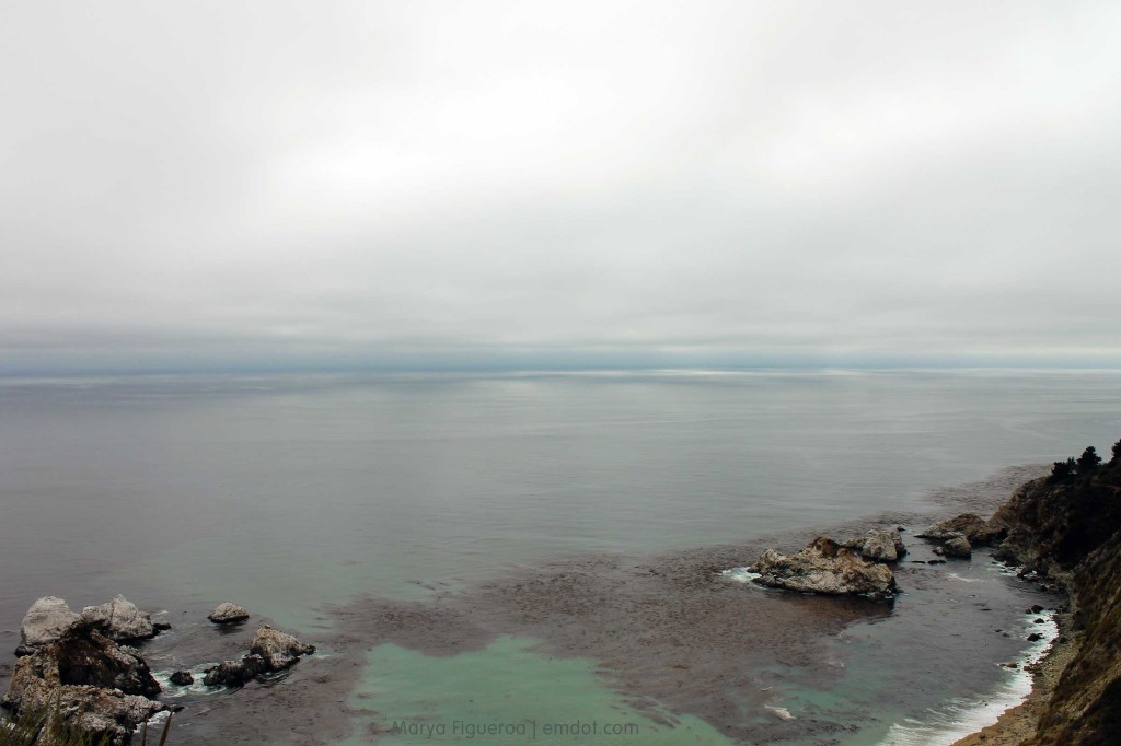 Low clouds; tons of kelp visible from the surface of the ocean