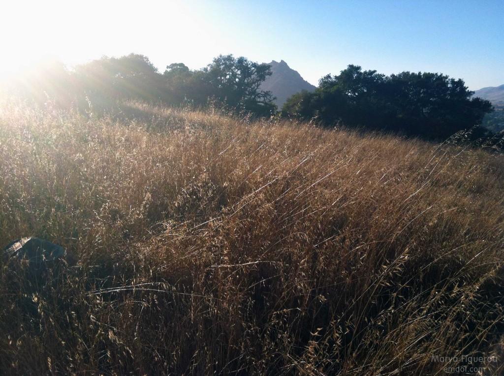Lemon Grove Loop hike