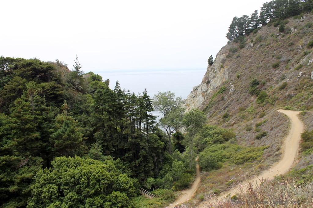 Trail down to Partington Cove