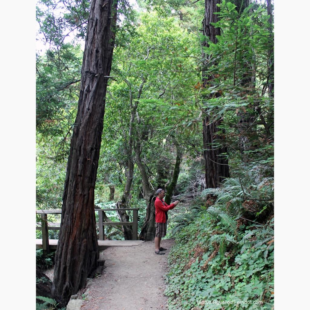 Steve taking photos next to big trees
