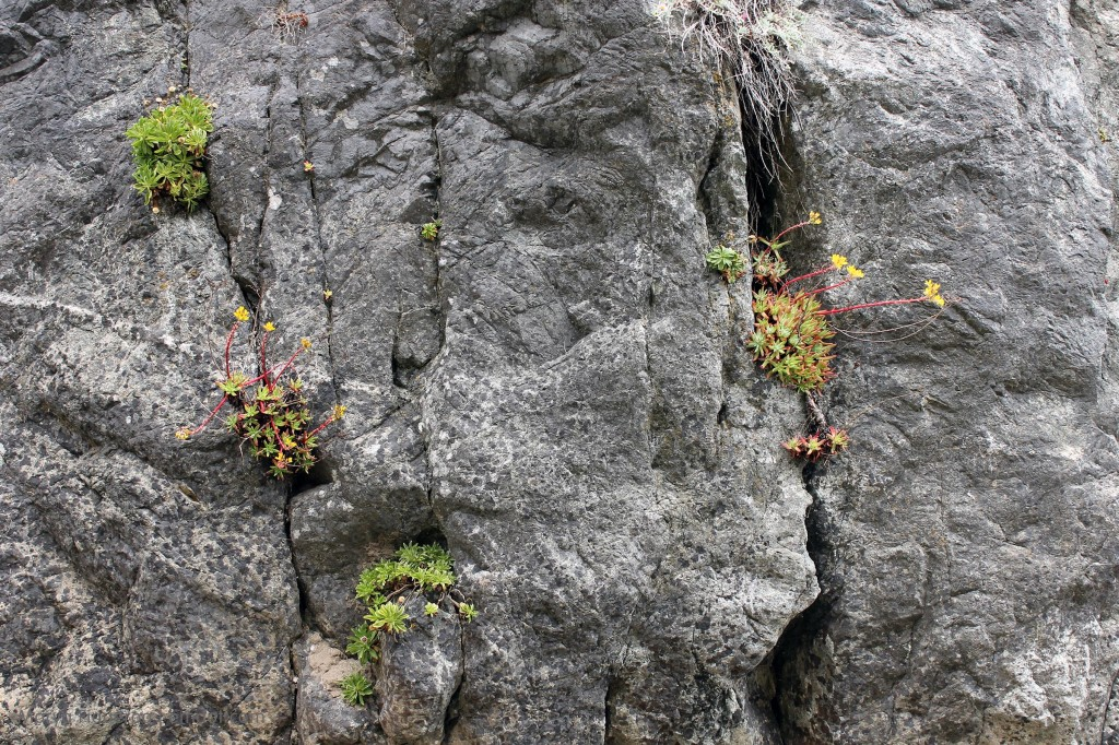 Hearty plants grow in the rock walls