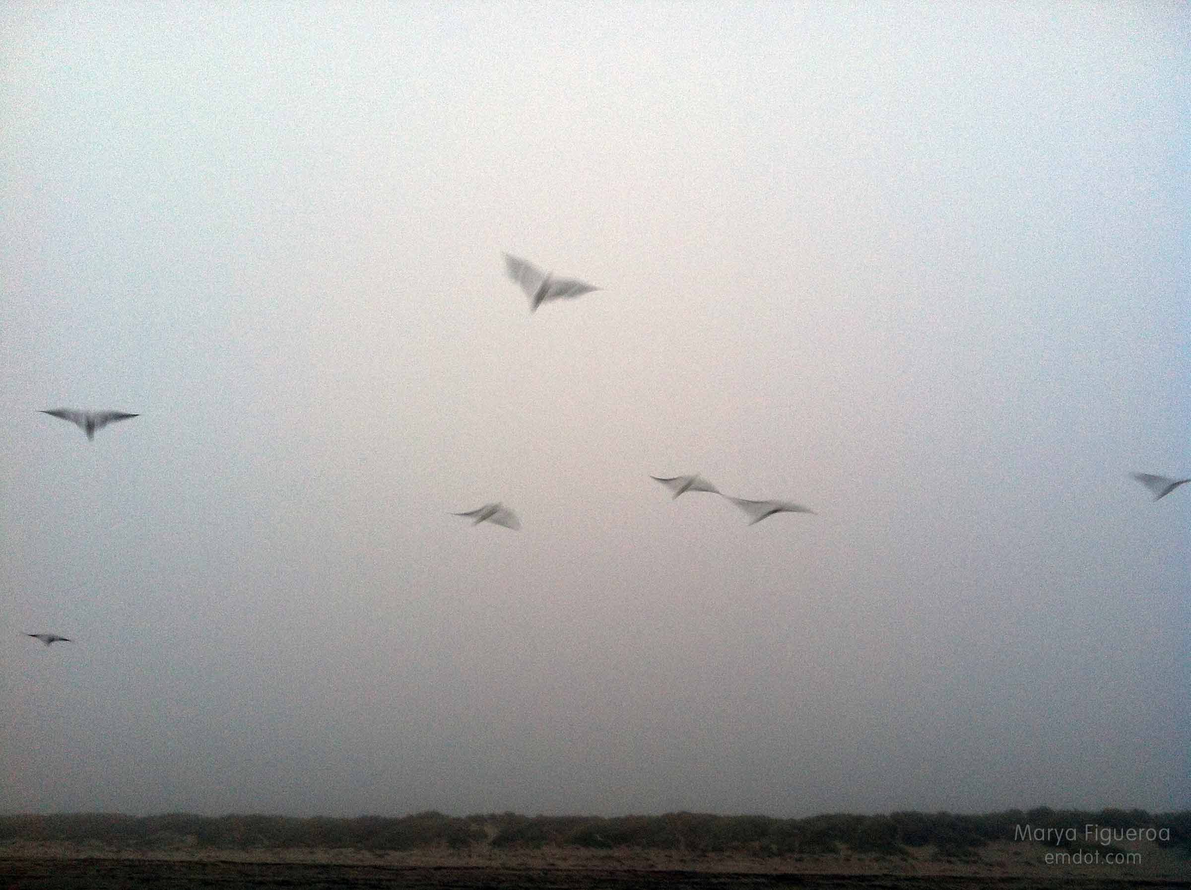 birds. blurred