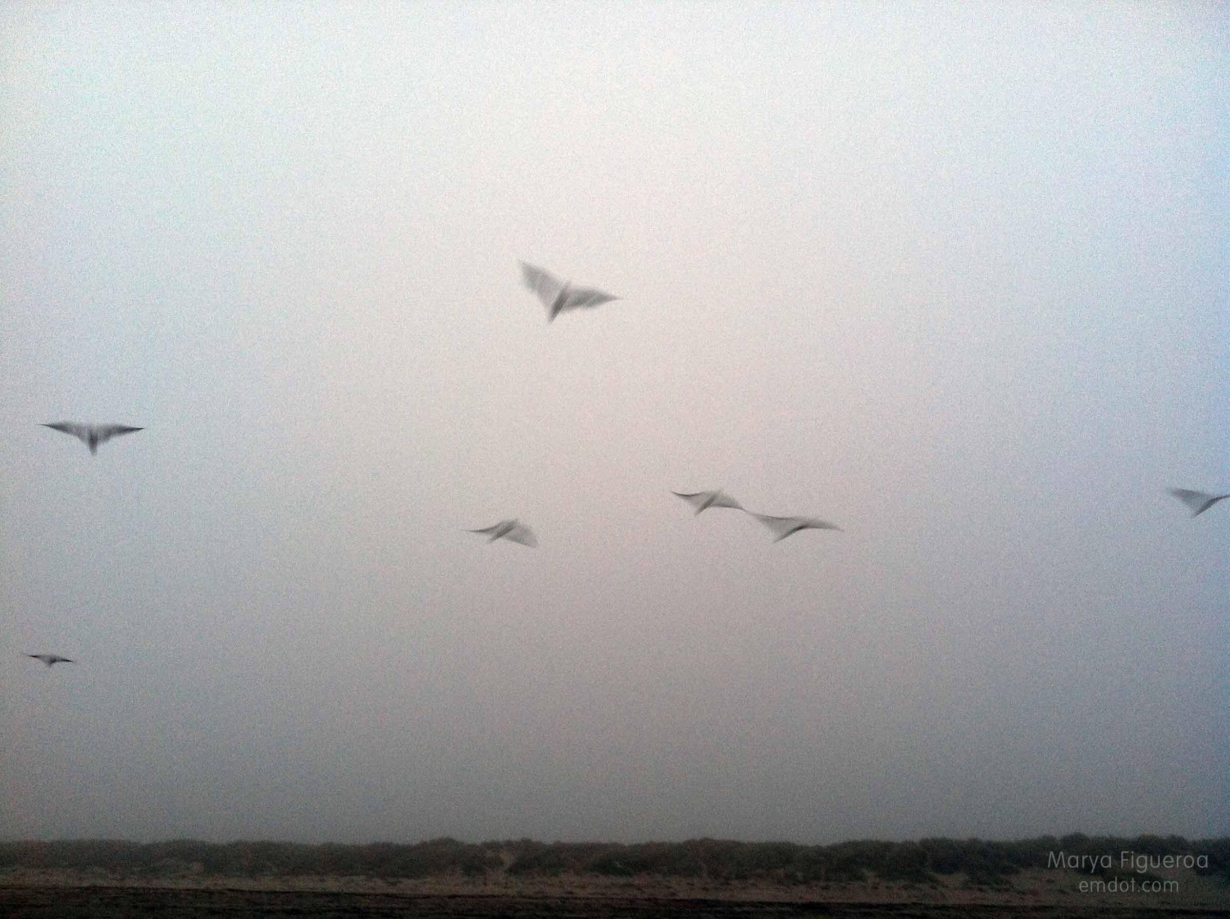birds. blurred