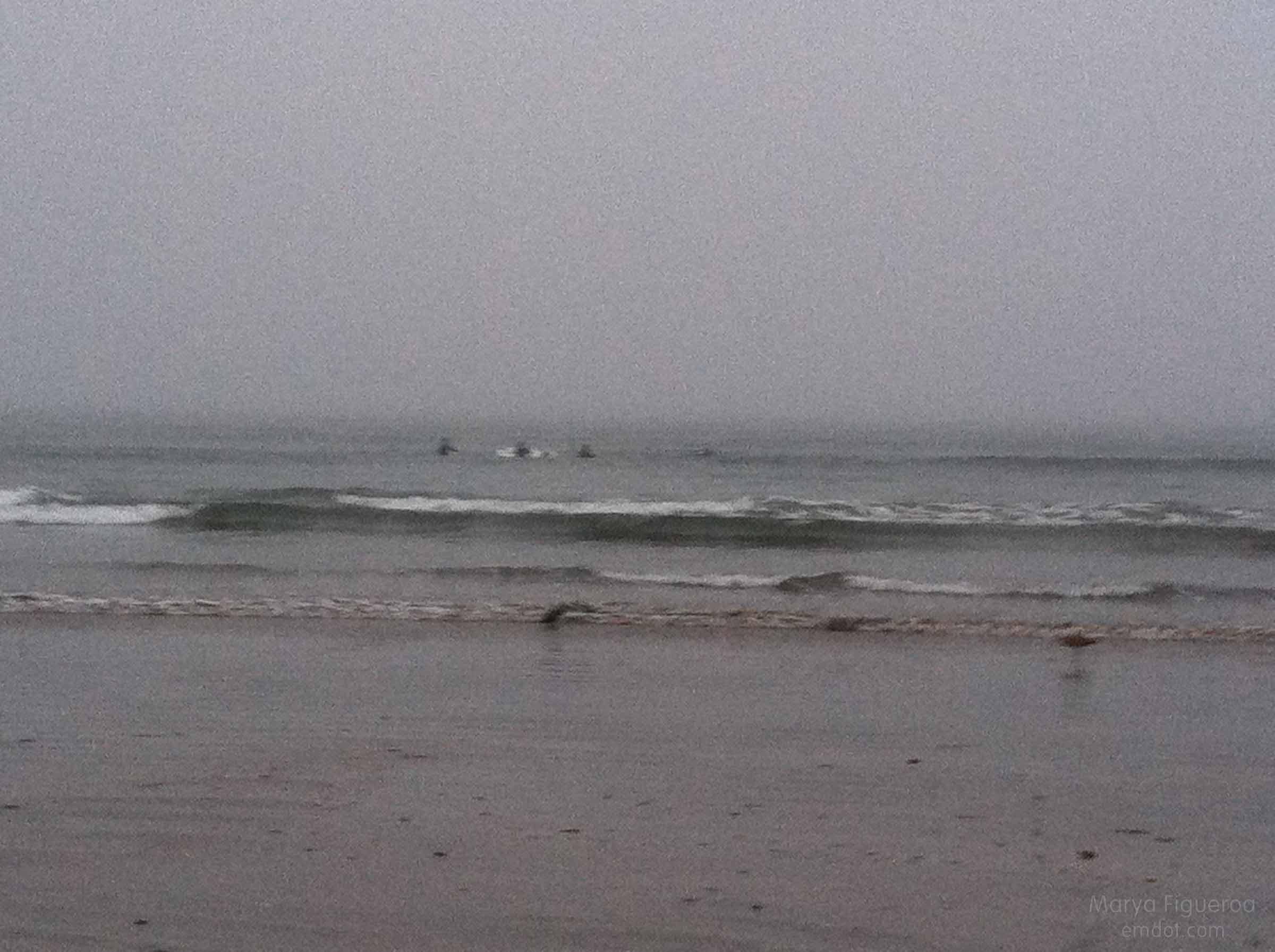 surfers: wishful thinkers