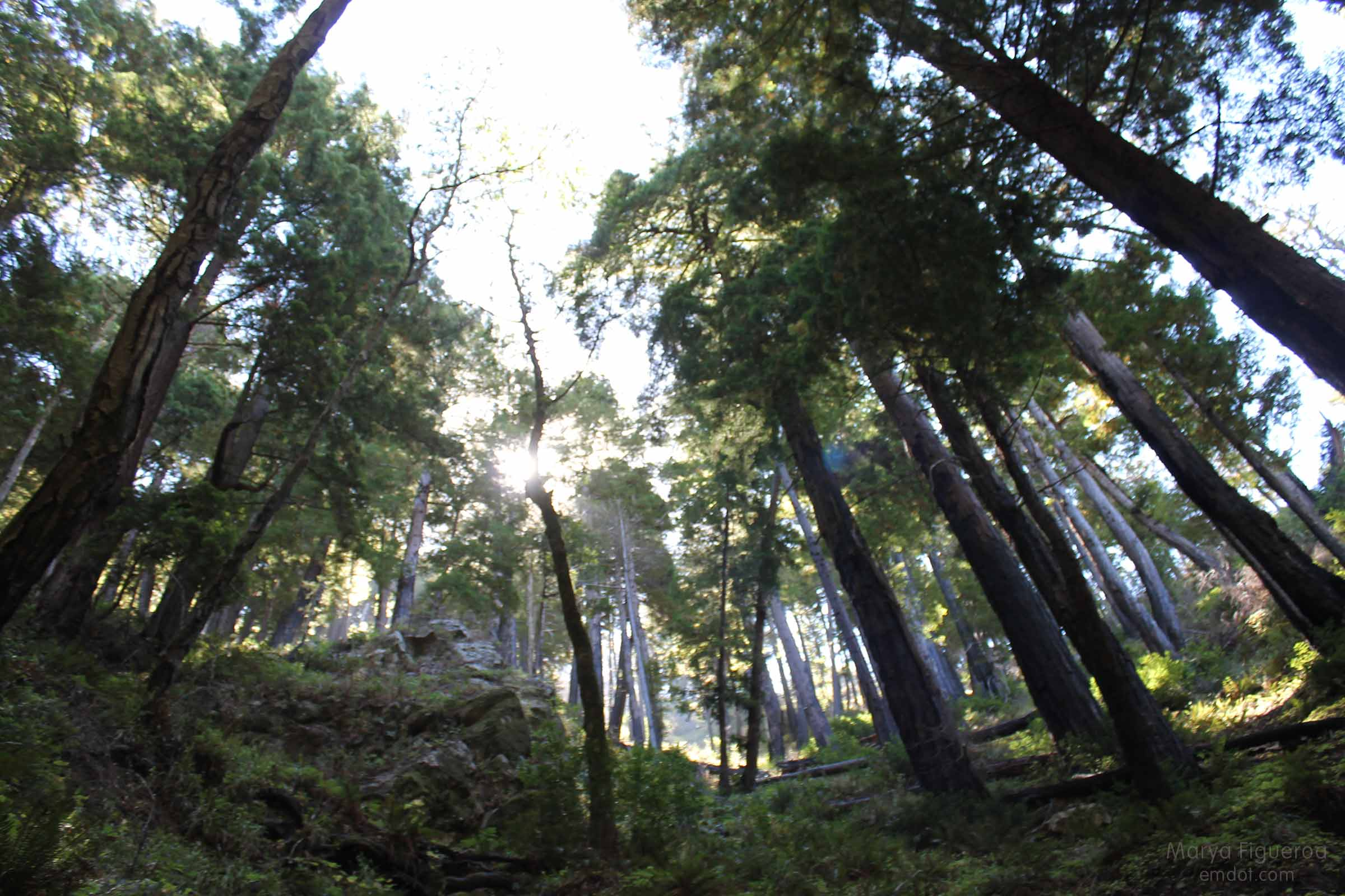 the forest at the tanbark trail