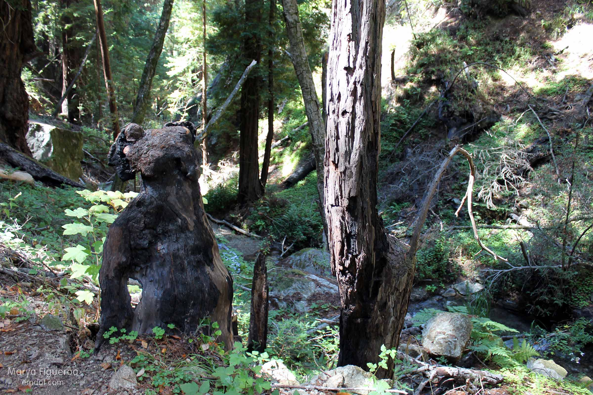 another view of the bear