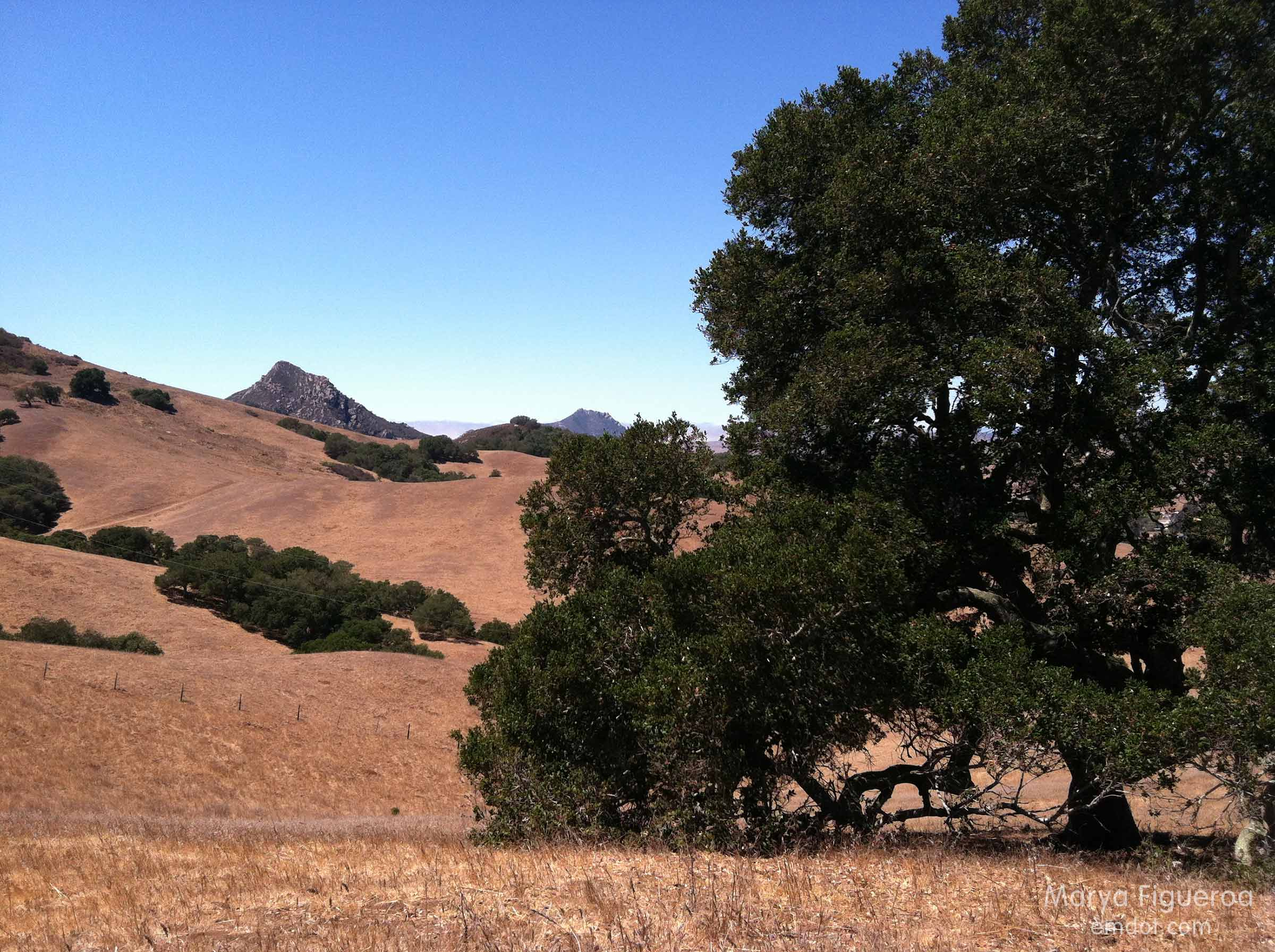 Hillsides, oak tree and cerros
