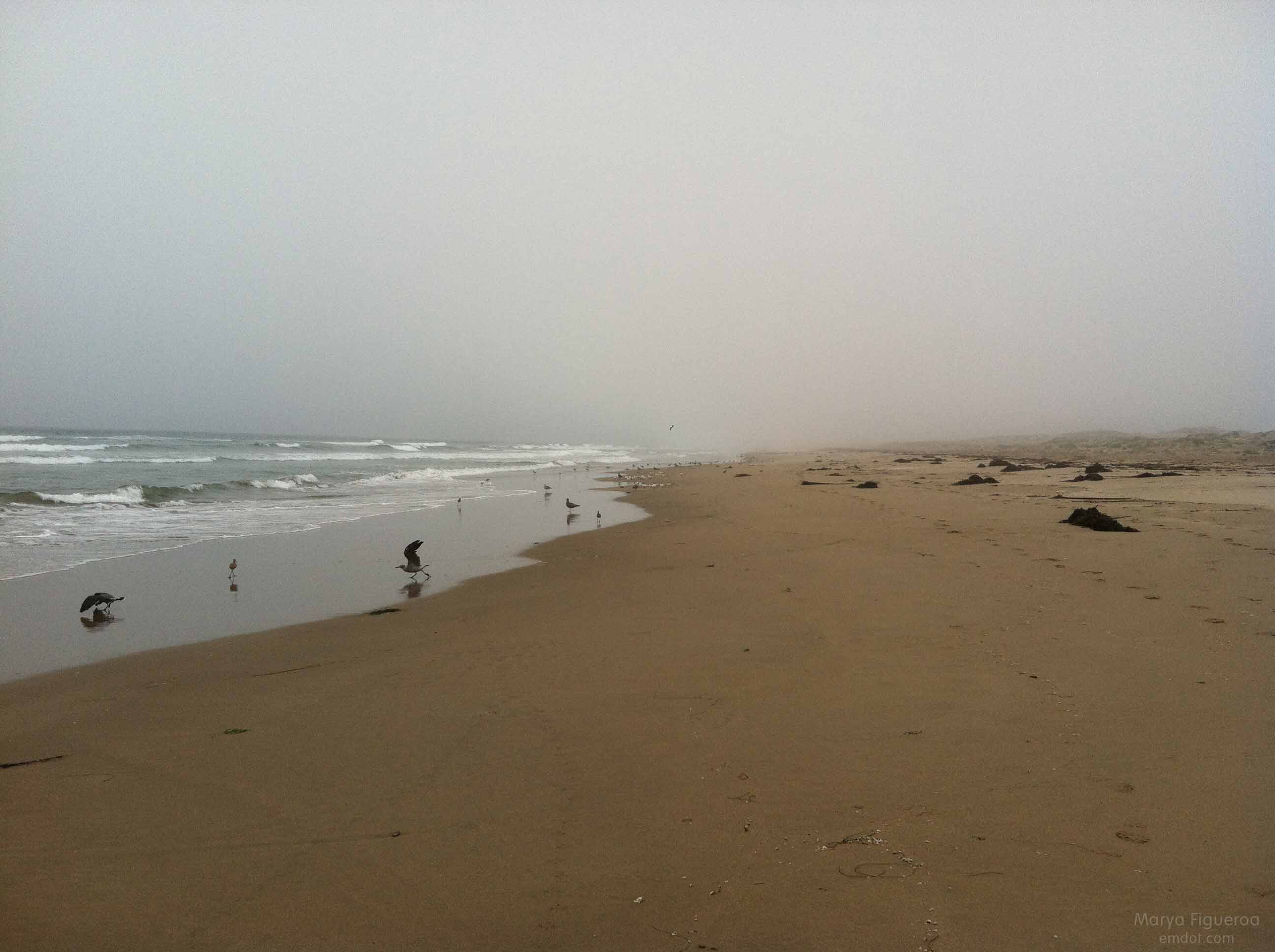 sandspit_081713_1birds