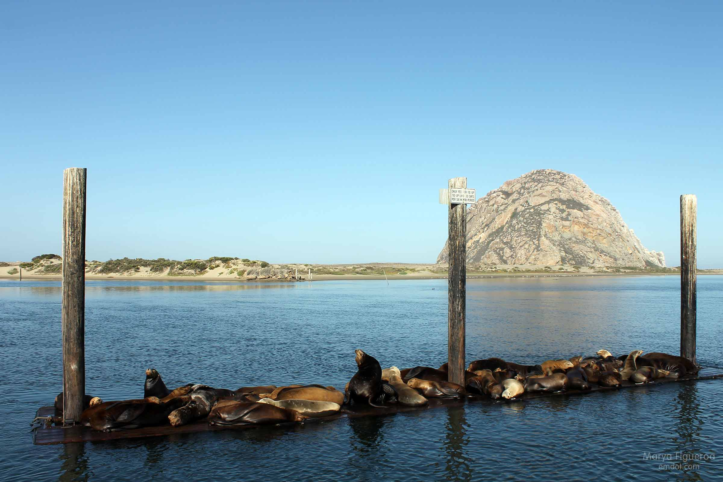 sea lions, closer