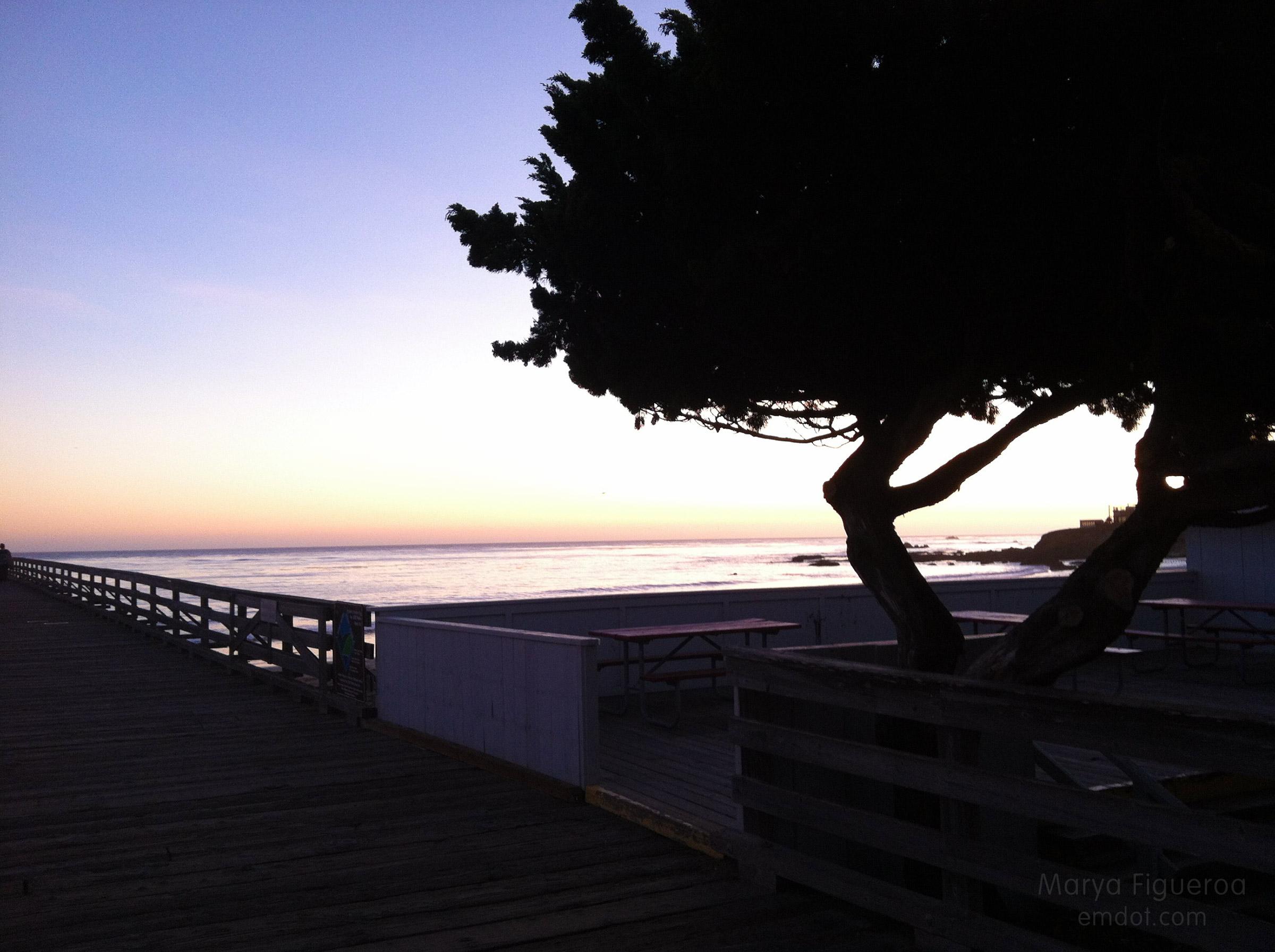 tree on the pier