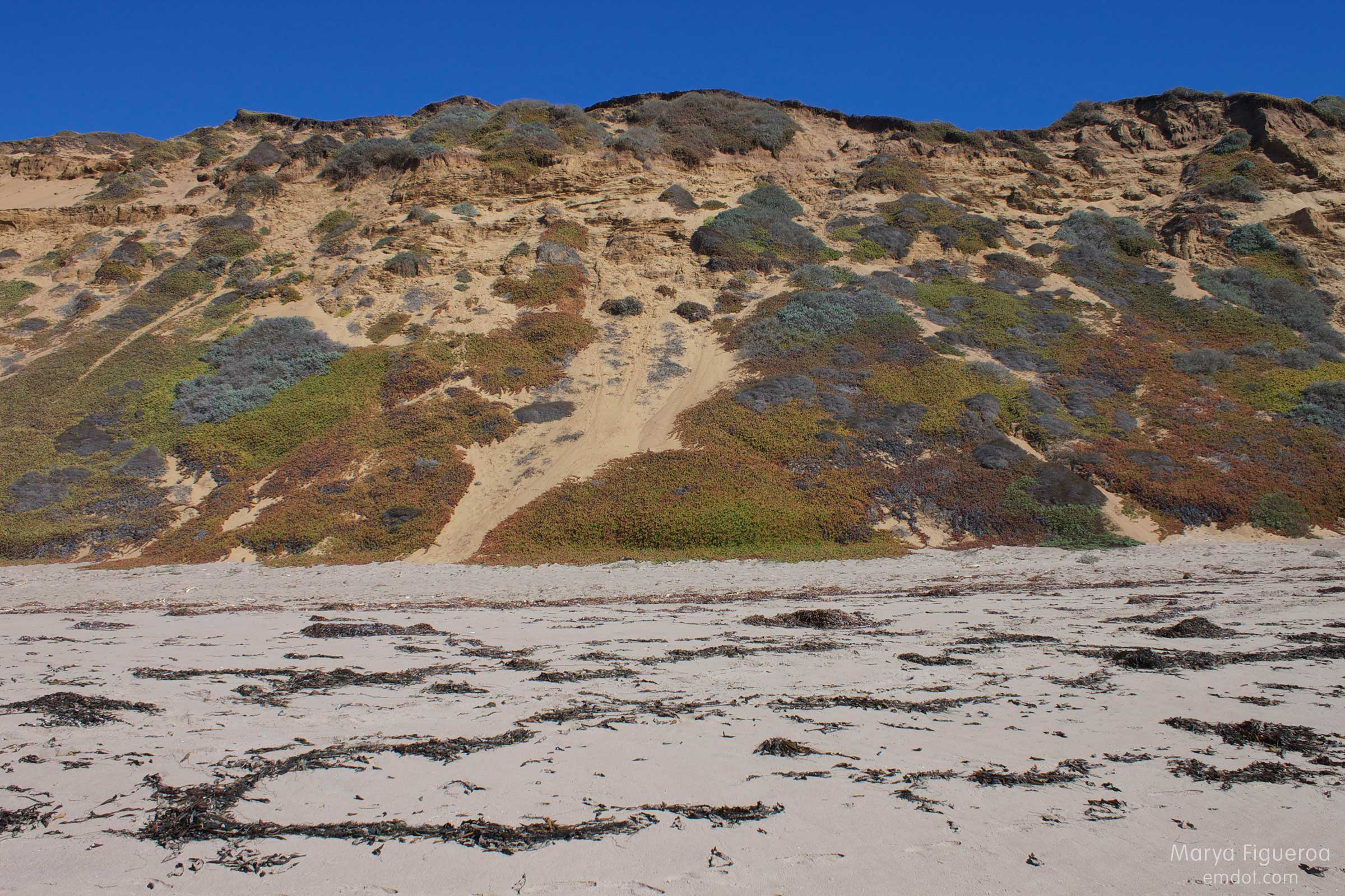 the sandy cliff