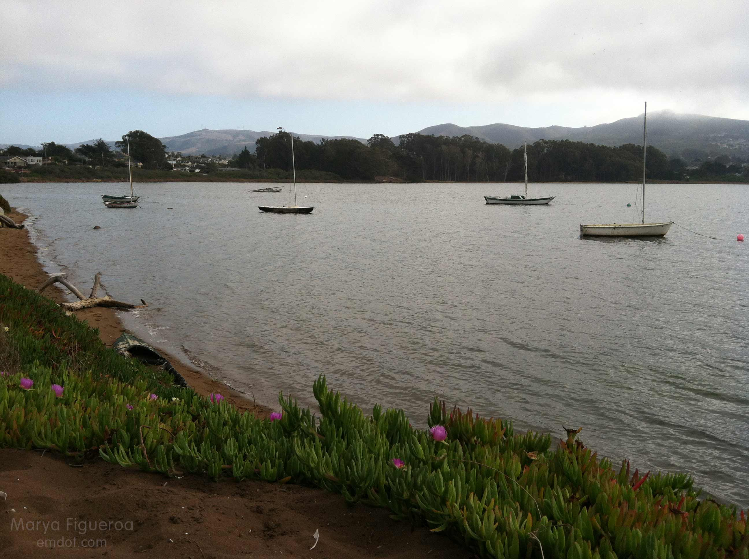 Ice plant and boats