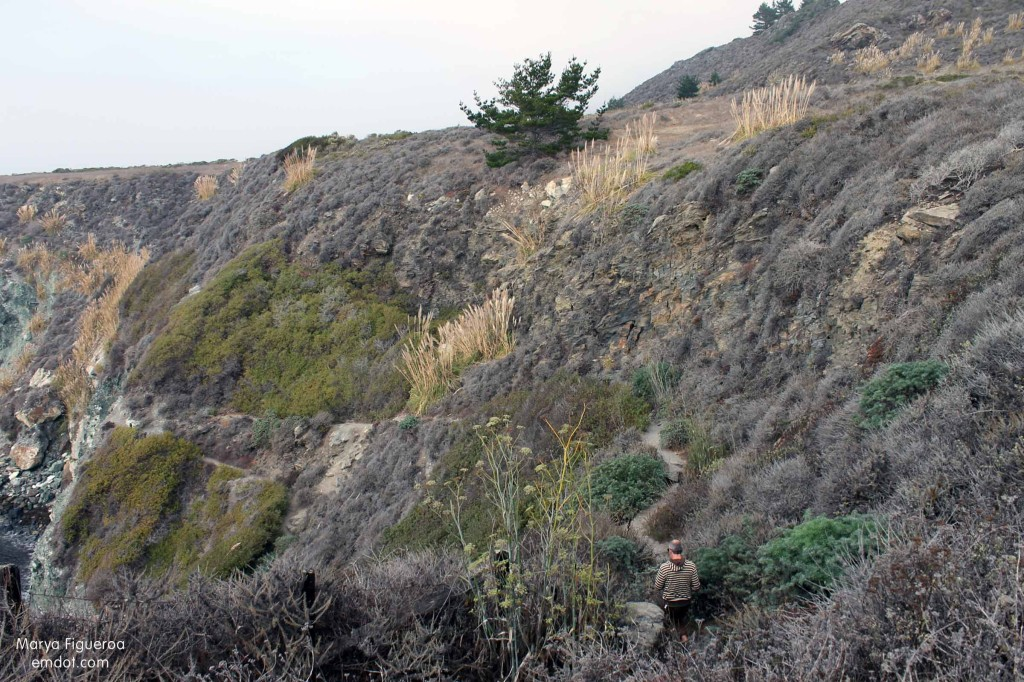 trail down hillside