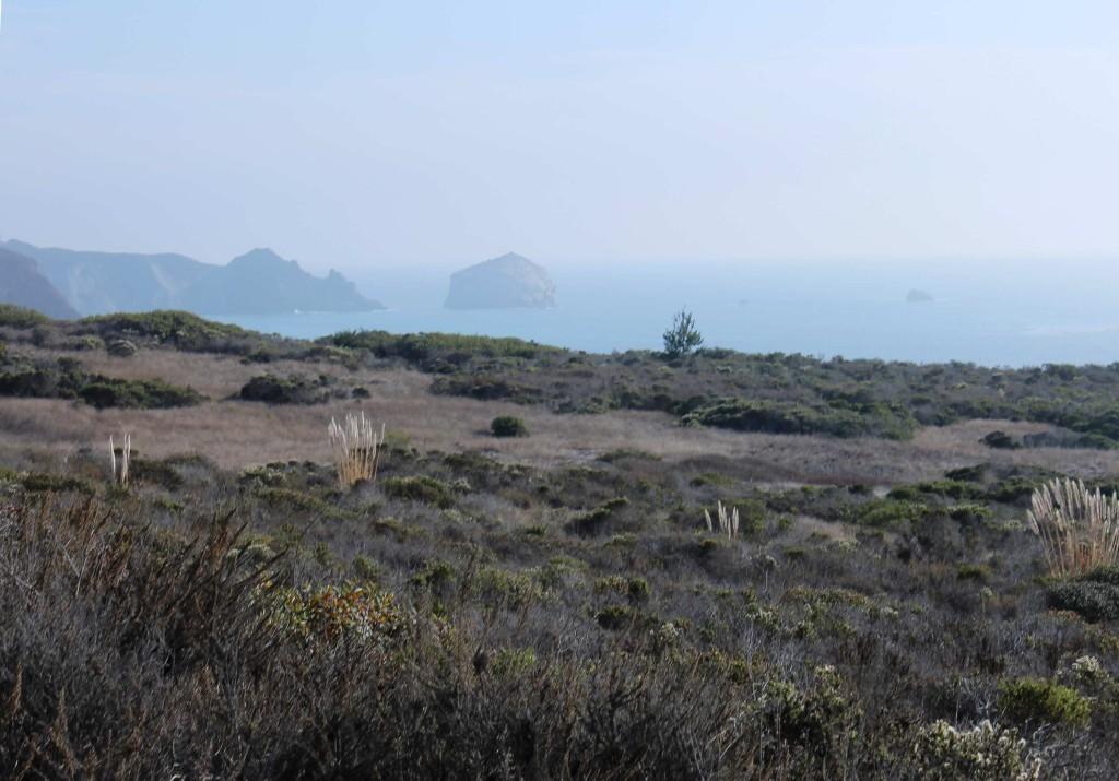 across the marine terrace