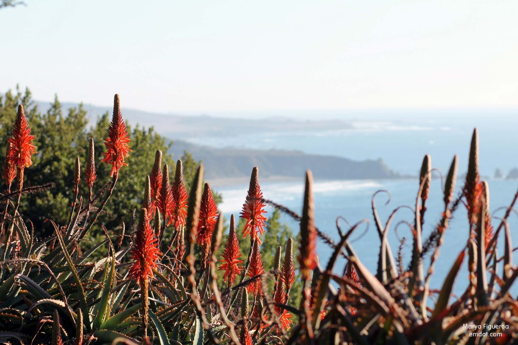 Aloe and coastline