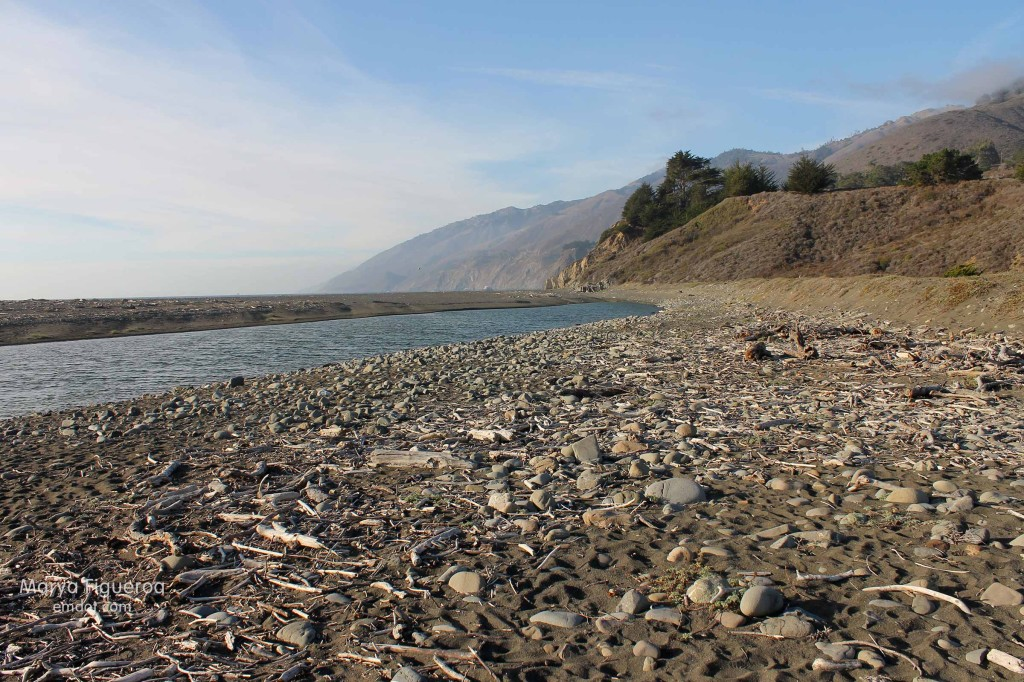 driftwood along San Carpoforo creek